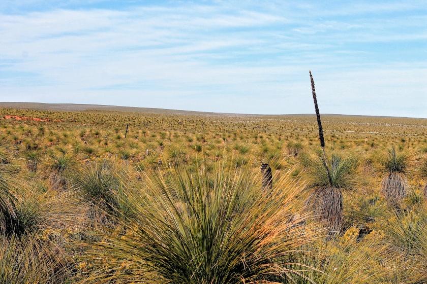Lesueur National Park Western Australia Grass Trees