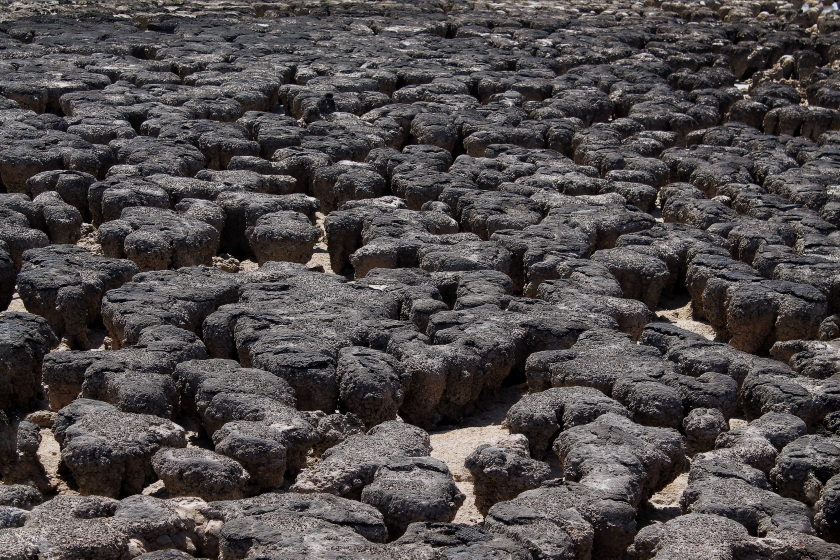Stromatolites Cyanobacteria Hamelin Pool Shark Bay Western Australia