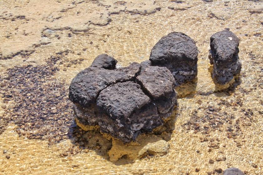 Stromatolite Cyanobacteria Hamelin Pool Shark Bay Western Australia