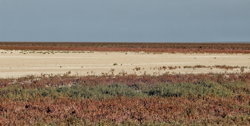 Salt Marsh Roebuck Plains Broome Western Australia