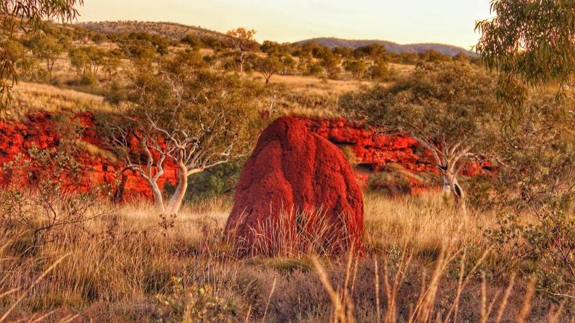 Termite mound Dales Gorge Karijini Pilbara Western Australia